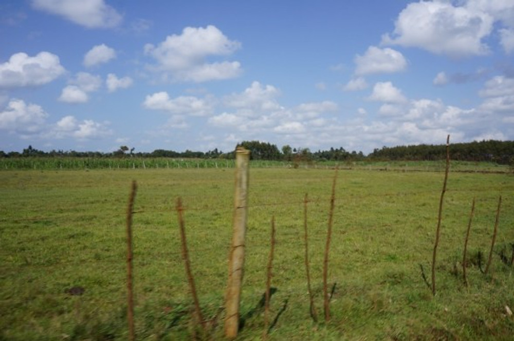 A moment of quiet in the farmland around Samro School and the Ukweli Training Centre in Eldoret, Kenya
