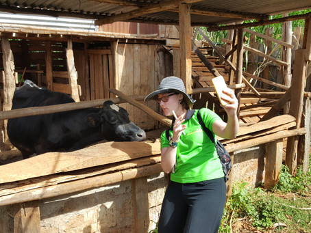 Taking a selfie with a cow