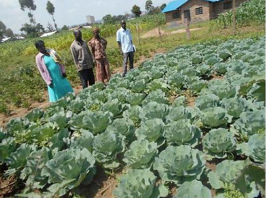 Grant Update! Sustainable Farms in Kenya