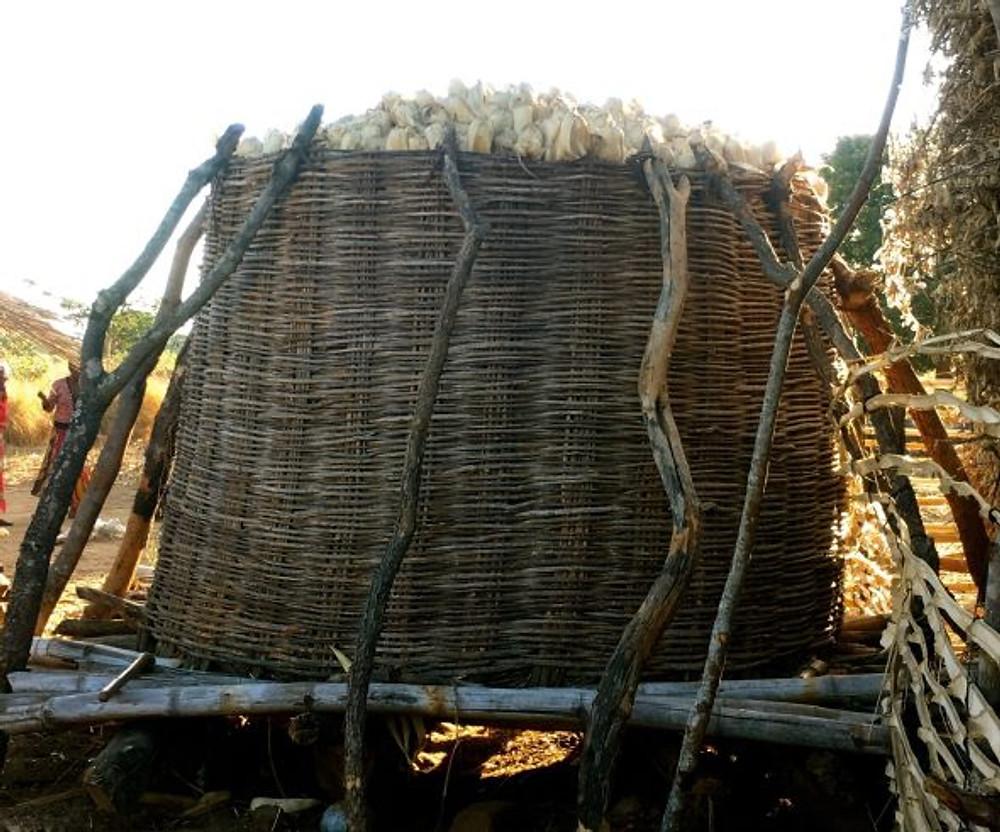 maize storage