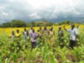 ken_dk_28-32_group in sunflower field.JP