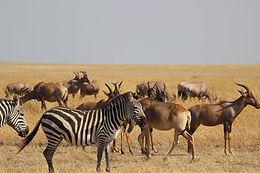 Kenya's Savannas and Wildlife