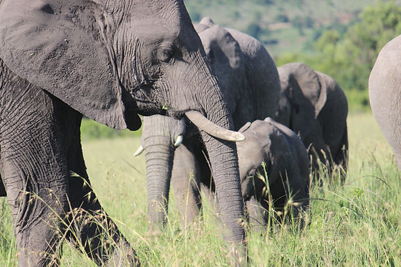 """""""Big Five"""" and Family Totems in Kenya"""