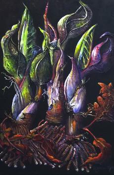 Skunk cabbages ©Denise Cliffen