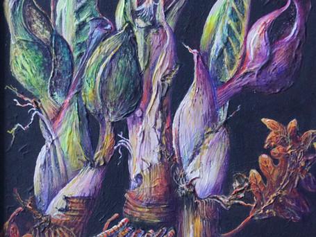 Skunk Cabbages