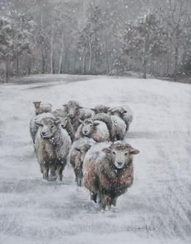 Sheep In Winter ©Denise Cliffen