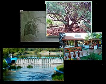 Actividades El Patio Olmos Alojamiento. Santa Rosa del Conlara. Balneario, Arbol de la Vida, Bajo de Veliz.