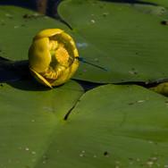 Besuch am Teich; RS Fotografie