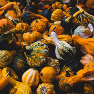 Herbstfrüchte; RS Fotografie