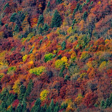 Herbst am Jurahang; RS Fotografie
