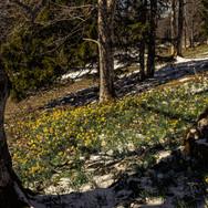Das Frühjahr kommt; RS Fotografie