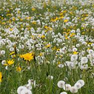 Warten auf den Frühling; RS Fotografie