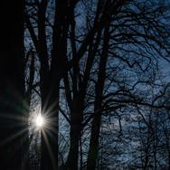 Stuttgart Rotwildpark; RS Fotografie