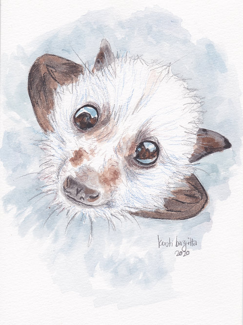 Flying Fox Pup Postcard