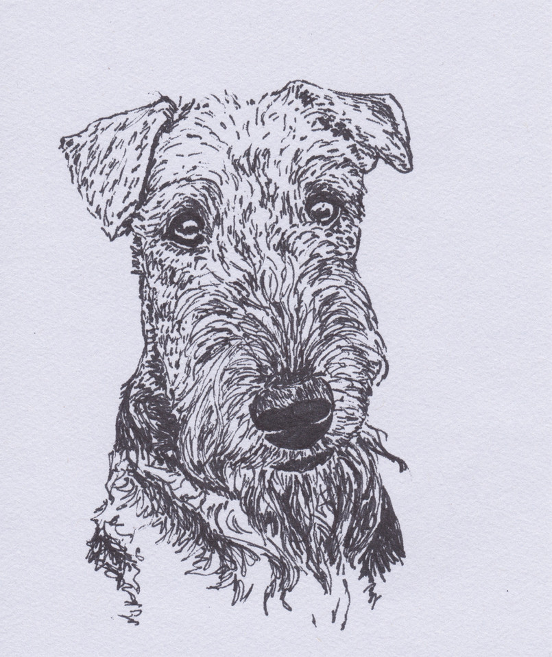 Airedal Terrier