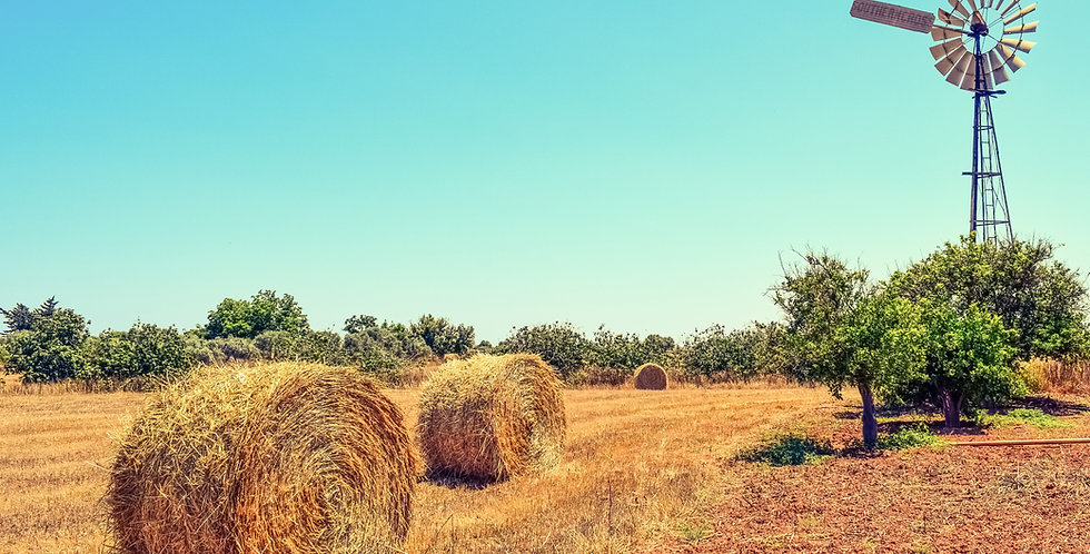 Contribute Directly to Hay