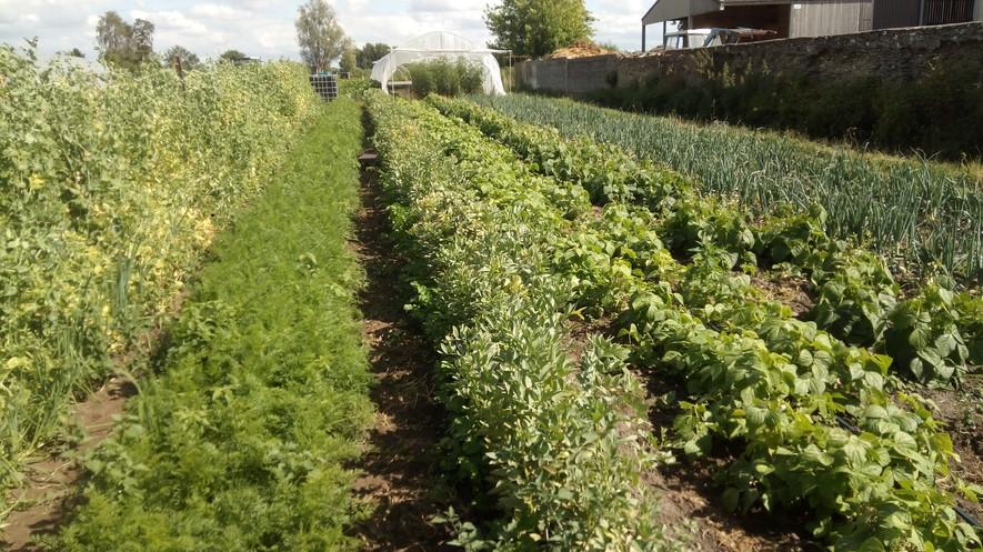 nos planches de légumes