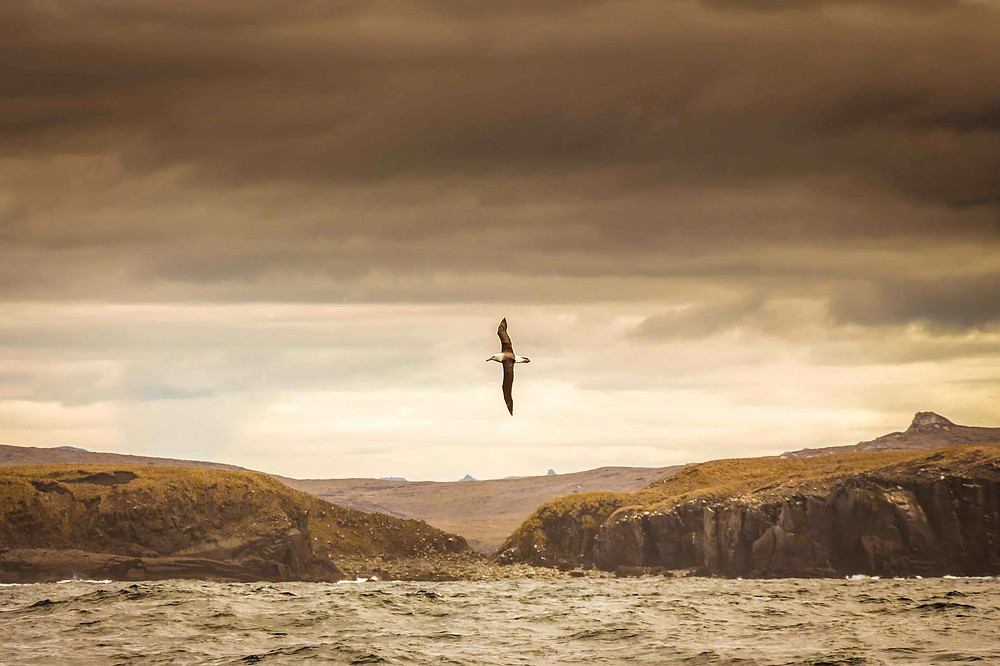 Albatross over Cape Horn