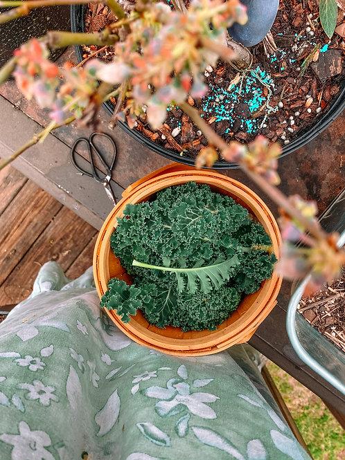 Blue Scotch Curled, Kale Seeds