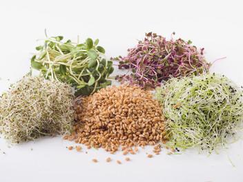 Le bienfait des graines germées