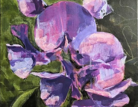 Purple Sweet Pea