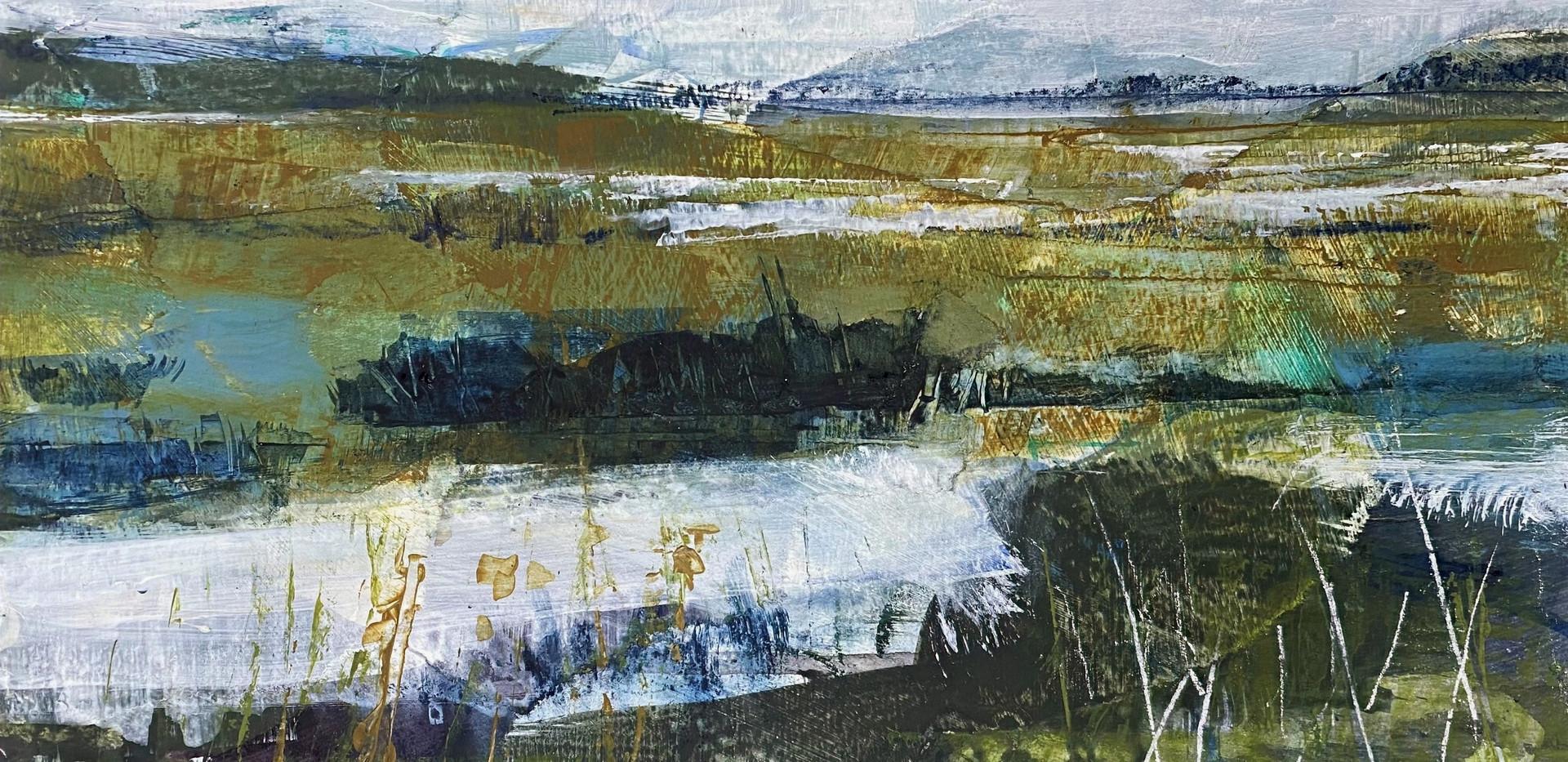 Wetland Outlook