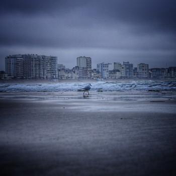 Une mouette à la mer