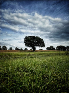 La nature Vendéenne