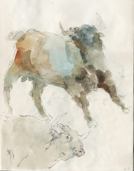 Study of Bulls (I)