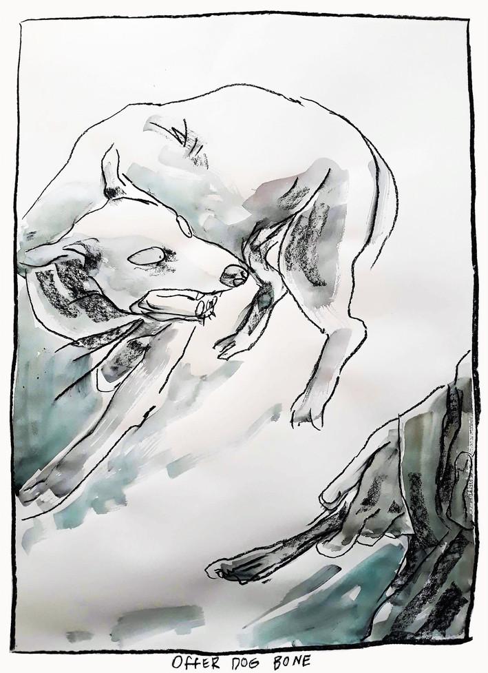 Offer Dog Bone
