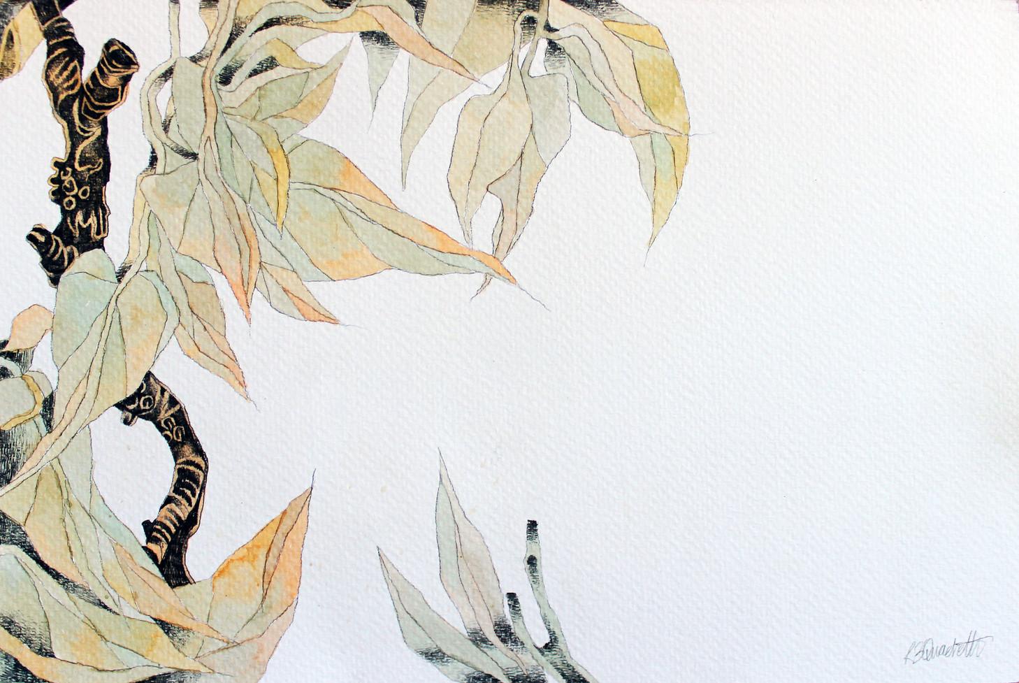 Plant Study II