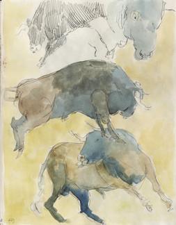 Study of Bulls (II)