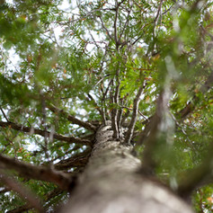 kmbD Nature Love 168.jpg