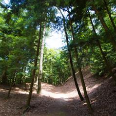kmbD Nature Love 83.jpg