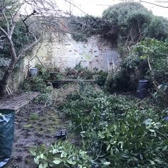 Cutting down the climbing ivy plants.