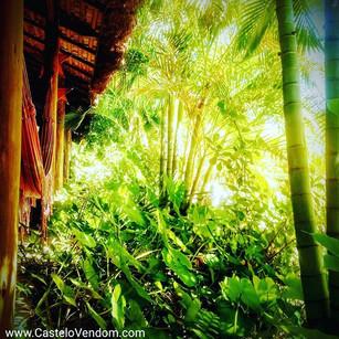 Jungle fever or Jungle chill __._._._.jp