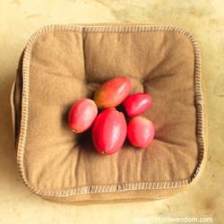 Castelo Vendom cactus fruit