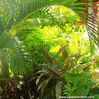 An ecologic tropical garden