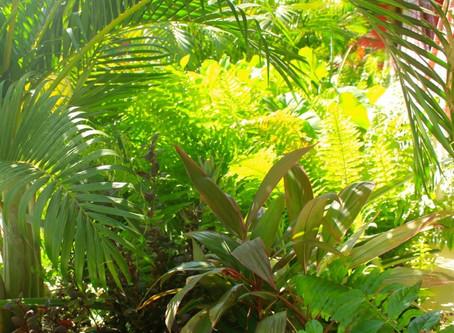 An ecologic tropical garden