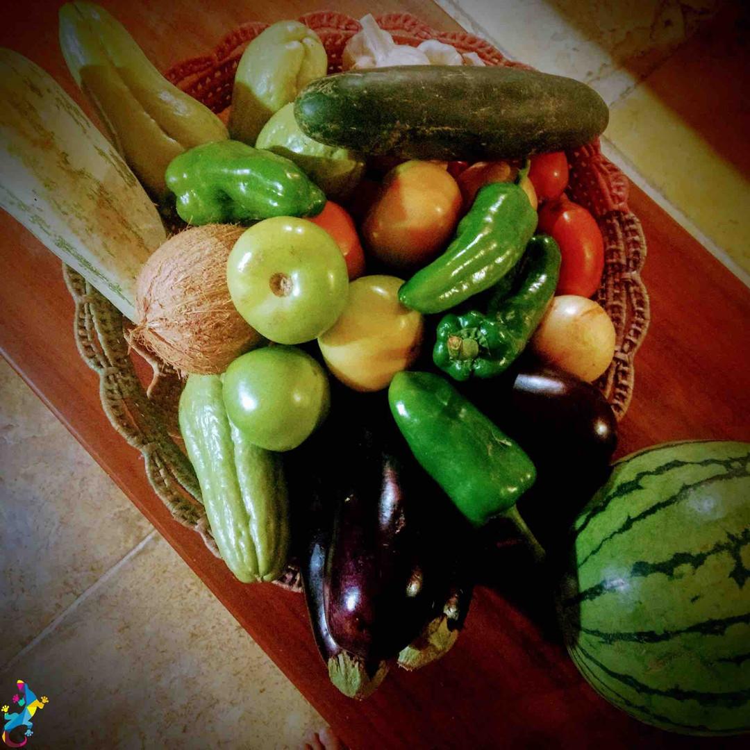 Parajuru©CasteloVendom-legumescorbeille.