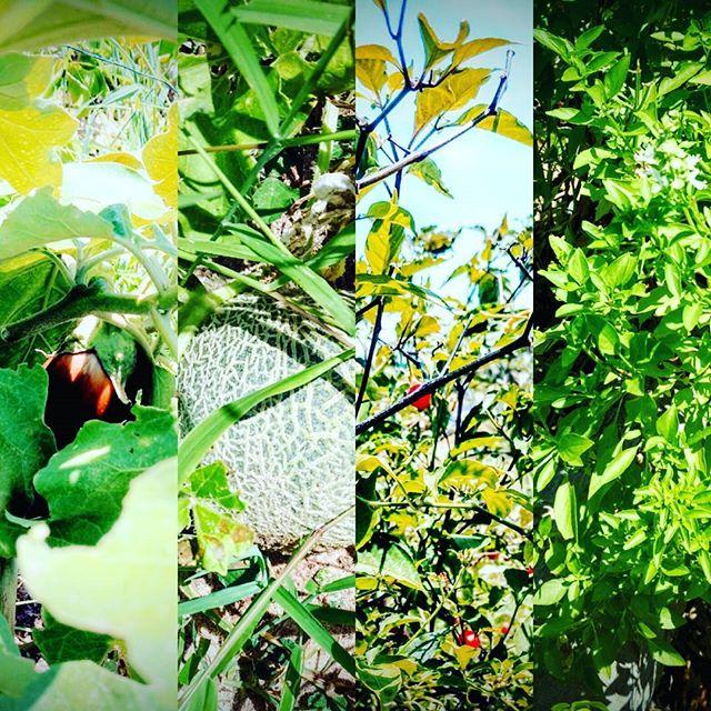 végétation du jardin