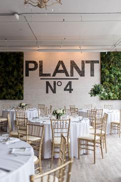Plant N° 4
