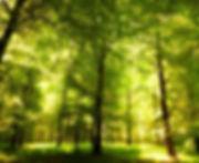 Grzyby leśne