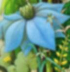 Lucy - Cornflower.jpeg