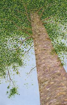 Kauri Tree #3.jpg