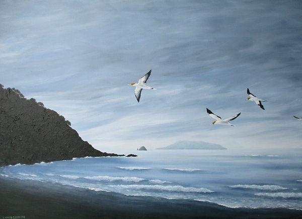 Lindsay's Photo #4-Fletcher Bay - gannet