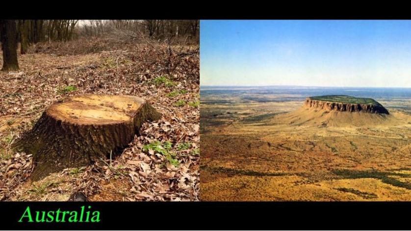 Havia Uma Árvore Gigante no Centro da Terra Plana