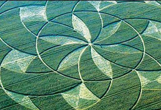 Crop Circles O que Eles Não Querem que Você Veja