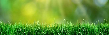 green-grass-1.jpg