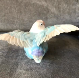 Lucy showing off her lovely wingspread.